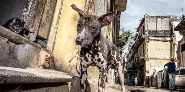 Street Dog in Havana, Cuba