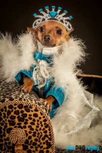 Chihuahua, Chihuahuas, Dogs, Hot Dogs, NYC, New York City, Tourism, Travel, U.S., USA, United States, animals, phoDOGraphy