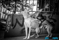 Dogs, animals, pets, phoDOGraphy, street photography
