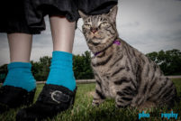 Cats, Tourism, Travel, Traveling with a cat, U.S., USA, United States, animals, leashed cat, on a leash, phoDOGraphy, traveling cat, traveling with cats