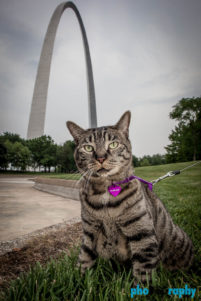 Cats, Gateway Arch, MO, Missouri, Saint Louis, St. Louis, St. Louis MO, The Gateway to the West, Tourism, Travel, Traveling with a cat, U.S., USA, United States, animals, leashed cat, on a leash, phoDOGraphy, traveling cat, traveling with cats