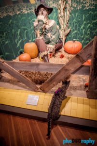 Cats, Kansas, Oz Museum, Oz museum, The Oz Museum, Tourism, Travel, Traveling with a cat, U.S., USA, United States, Wamego, animals, leashed cat, on a leash, phoDOGraphy, traveling cat, traveling with cats