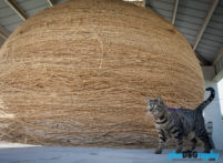 Cats, Kansas, Route 66, Rt. 66, Tourism, Travel, Traveling with a cat, U.S., USA, United States, World's Largest Ball of String, animals, leashed cat, on a leash, phoDOGraphy, traveling cat, traveling with cats