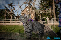 Cats, Kansas, Route 66, Rt. 66, Tourism, Travel, Traveling with a cat, U.S., USA, United States, animals, leashed cat, on a leash, phoDOGraphy, traveling cat, traveling with cats