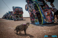 Amarillo, Cadillac Ranch, Cats, Route 66, Rt. 66, TX, Texas, Tourism, Travel, Traveling with a cat, U.S., USA, United States, animals, leashed cat, on a leash, phoDOGraphy, traveling cat, traveling with cats