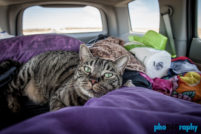 Cats, Route 66, Rt. 66, Tourism, Travel, Traveling with a cat, U.S., USA, United States, animals, leashed cat, on a leash, phoDOGraphy, traveling cat, traveling with cats