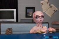 Alien Zone, Area 51 Museum, Cats, NM, New Mexico, Roswell, Tourism, Travel, Traveling with a cat, U.S., USA, United States, animals, leashed cat, on a leash, phoDOGraphy, traveling cat, traveling with cats