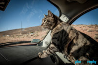 Cats, Traveling with a cat, animals, leashed cat, on a leash, phoDOGraphy, traveling cat, traveling with cats