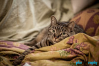 Cats, OR, Oregon, Portland, Tourism, Travel, Traveling with a cat, U.S., USA, United States, animals, leashed cat, on a leash, phoDOGraphy, traveling cat, traveling with cats
