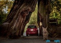 Cats, Giant Redwood Trees, Giant Redwoods, Traveling with a cat, animals, leashed cat, on a leash, phoDOGraphy, traveling cat, traveling with cats