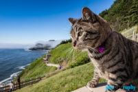Cats, OR, Oregon, Tourism, Travel, Traveling with a cat, U.S., USA, United States, animals, leashed cat, on a leash, phoDOGraphy, traveling cat, traveling with cats