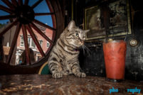 Cats, Deadwood, SD, South Dakota, Tourism, Travel, Traveling with a cat, U.S., USA, United States, animals, leashed cat, on a leash, phoDOGraphy, traveling cat, traveling with cats