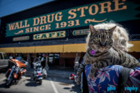 Cats, SD, South Dakota, Tourism, Travel, Traveling with a cat, U.S., USA, United States, Wall, Wall Drug, animals, leashed cat, on a leash, phoDOGraphy, traveling cat, traveling with cats