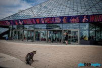 Cats, Cleveland, OH, Ohio, Rock and Roll Hall of Fame, Rock'n'Roll Hall of Fame, Tourism, Travel, Traveling with a cat, U.S., USA, United States, animals, leashed cat, on a leash, phoDOGraphy, traveling cat, traveling with cats