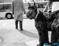 Dogs, NYC, New York, New York City, _Location, animals, pets, phoDOGraphy, street photography