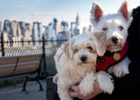Manhattan Skyline Dog Photographer