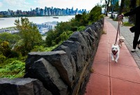 Pet photography New Jersey Manhattan Skyline