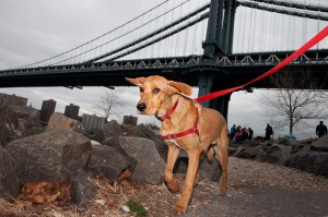 New York Dog Photographer—Creating Original Pet Portraits in Brooklyn
