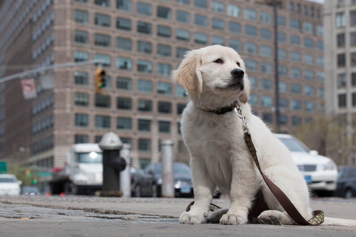 Dog dating new york