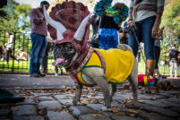 Tomkins Square Park Halloween Dog Parade 2012