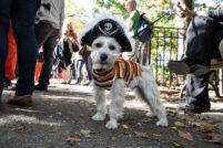 The 2012 Tomkins Park Halloween Dog Parade