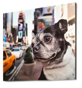 dog photographer in New York