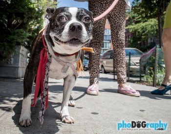 Dog Photography, Dogs, East Village, Lower East Side, Manhattan, NYC, New York, New York City, New York Dog Photographer, Pet Photos, Pet Portraits Manhattan, animals, pet photography, phoDOGraphy, street photography, the pet photographer