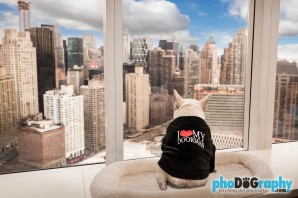 Commercial Dog Product Photography in New York City