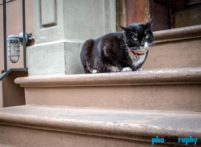 Cats, Dogs, NYC, New York, New York City, _Location, animals, pets, phoDOGraphy