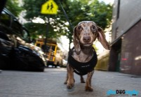 Dogs, NYC, New York, New York City, _Location, animals, pets, phoDOGraphy