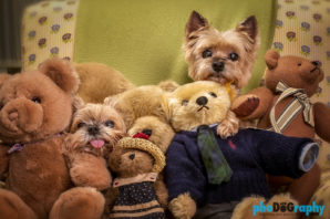 Dogs, animals, at-home, in the home, pets, phoDOGraphy