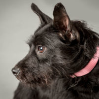 Shelter Dog Portraits by New York City pet photographer