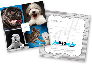 Pet Photography Makes a Great and Memorable Gift