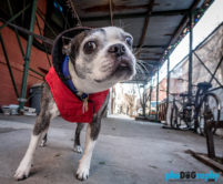 New York Dog Photography