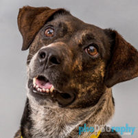 Shelter Rescues dog photographs