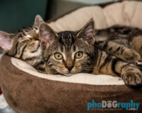 Shelter Rescues cat photographs