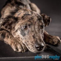 Shelter Dogs Photographed by phoDOGraphy.com