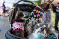 pet photographer in New York City