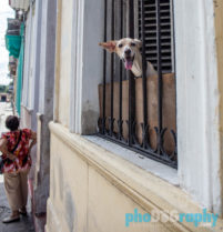 Dogs and Cats on the streets of Havana, Cuba