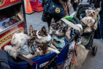 rescued cats and dogs at Adoptapalooza, by phoDOGraphy