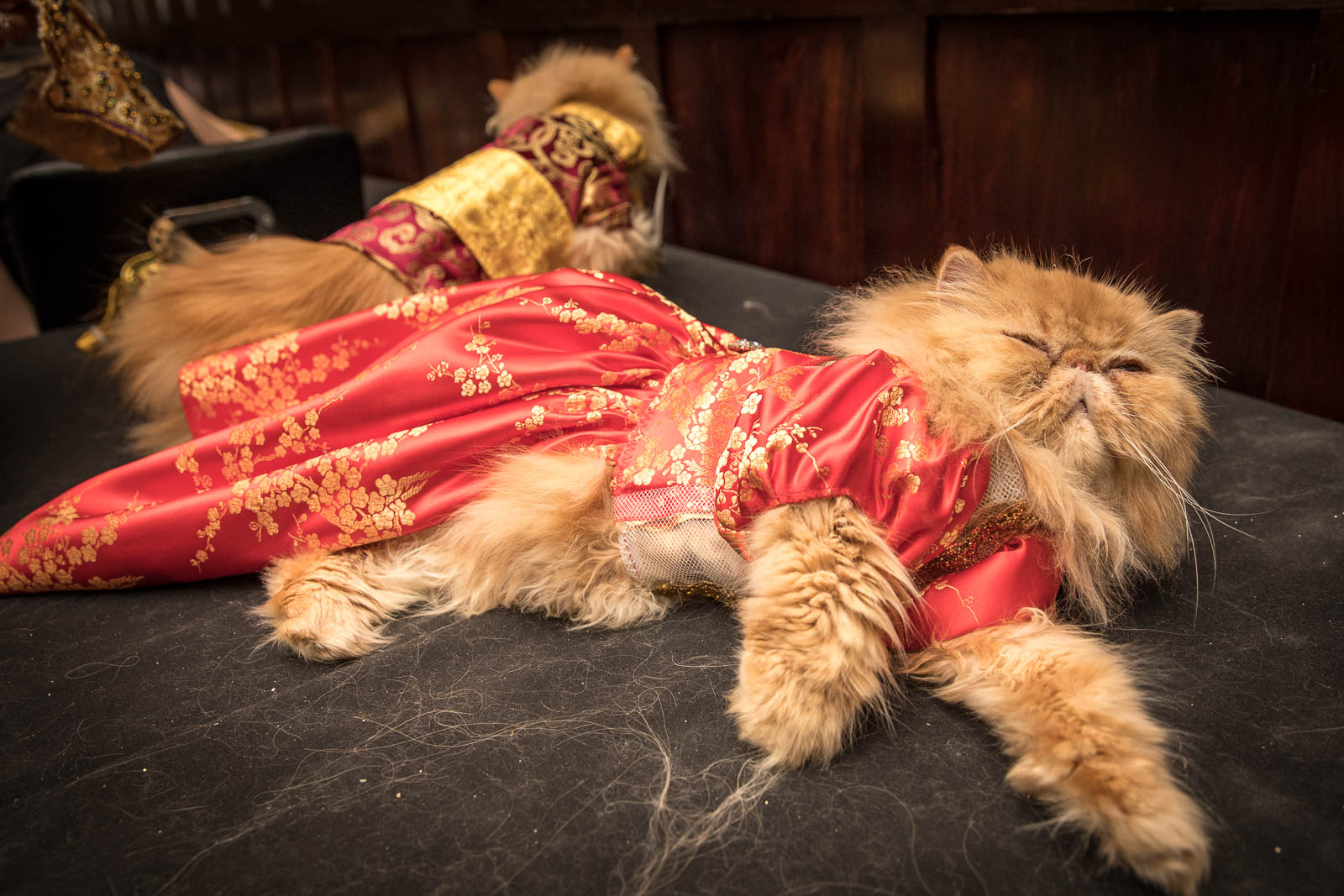 Cat Fashions By Ada Nieves At The Famous Algonquin Hotel