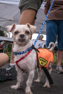Rescued dogs at Adoptapalooza by pet photographer Mark McQueen—phoDOGraphy.com