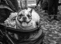 Pet Fashion Show New York photographer Mark McQueen