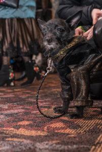 Pet Fashion Show New York phoDOGraphy